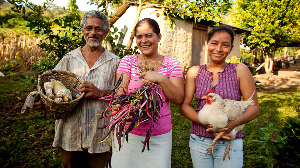 animals & agriculture projects in Honduras