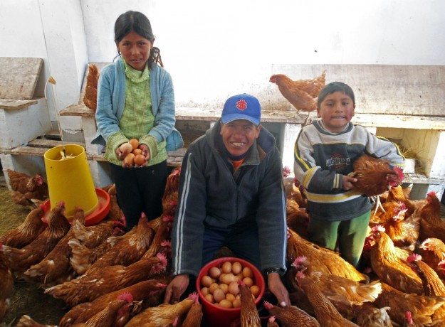 Animal and Agriculture Programs Bolivia