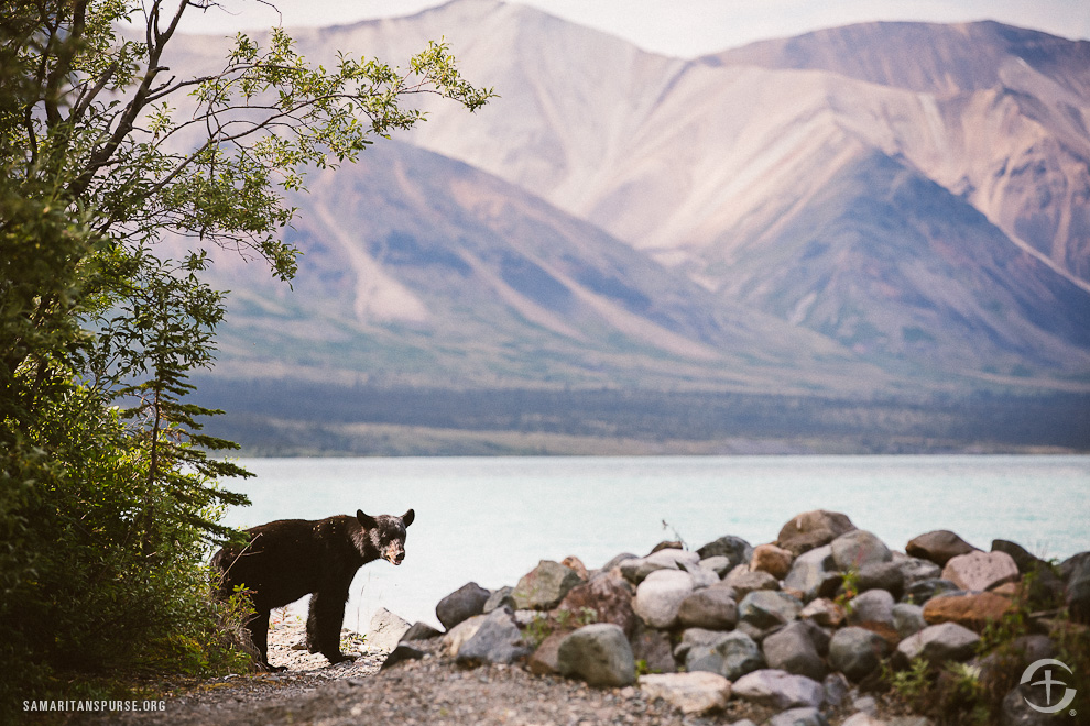 A black bear pays a visit to couples taking an excursion to the shores of Twin Lakes.