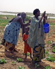 Niger Agriculture