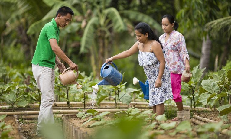 Philippines gardening