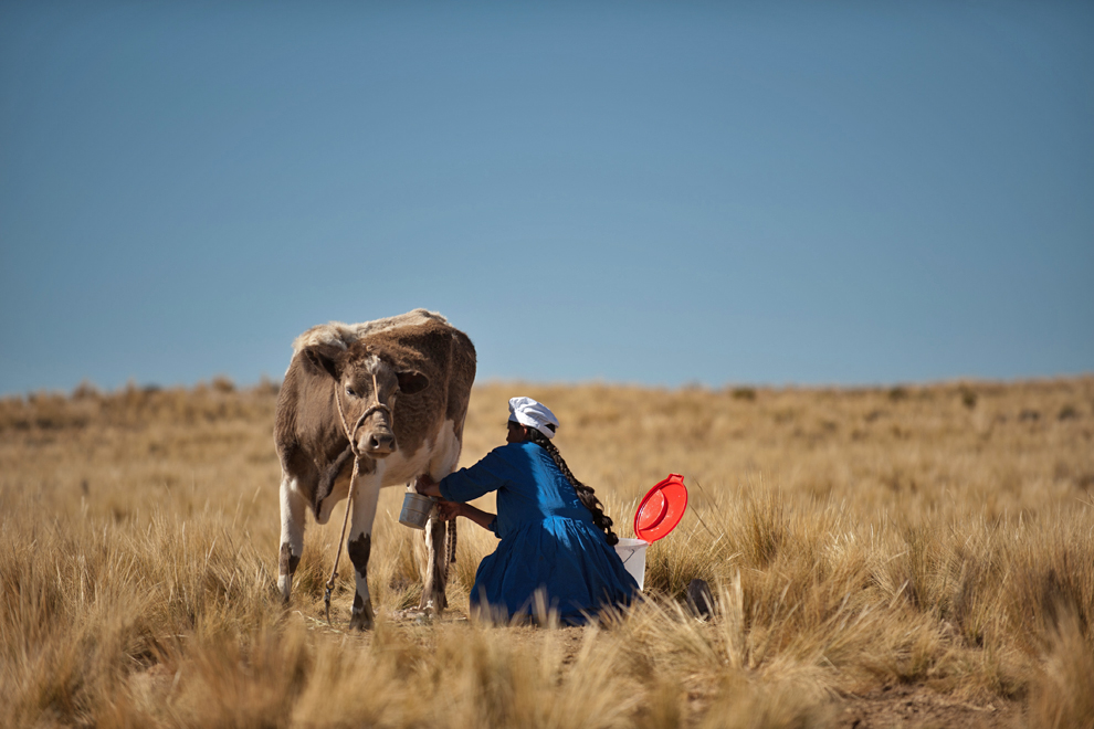 Dairy cows were gifted to families in Bolivia to help provide better nourishment for people in their communities.