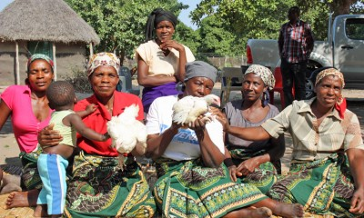 Chicken project in Mozambique
