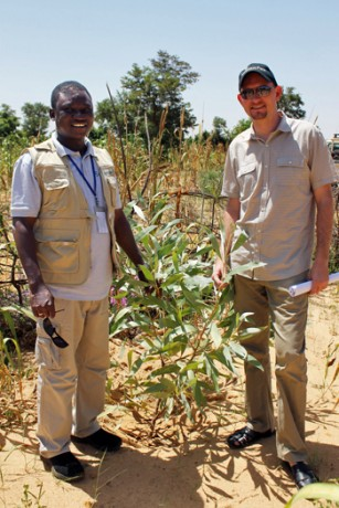 Bringing the Australian Acacia to Niger