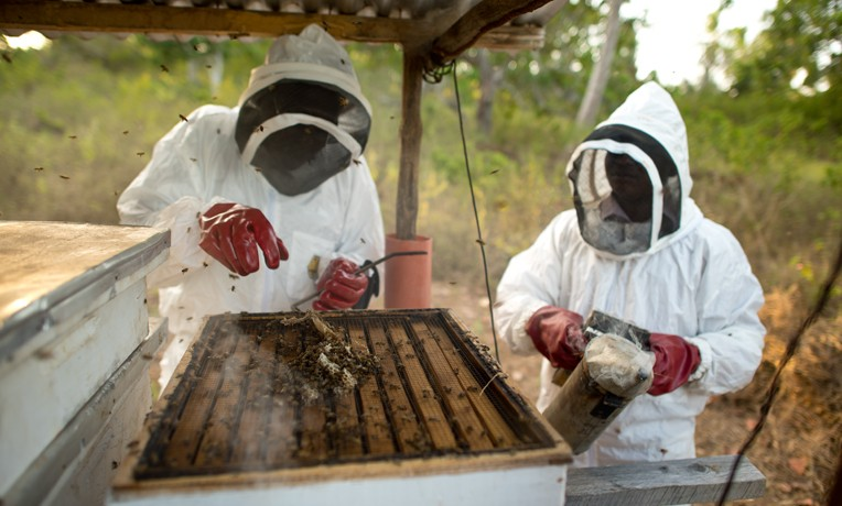 Kenya bee program