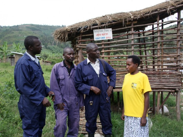 The livestock team--Moses, John Bosco, and Richard--chat with Florine.