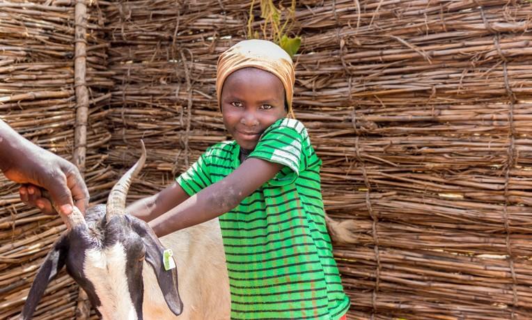 Samaritan's Purse goat project in Niger
