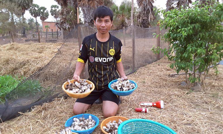 Cambodia mushrooms