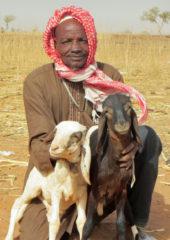 1611ne-c1-007 Niger sheep