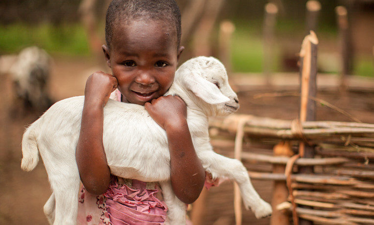 Each nanny goat can produce a liter of fresh milk every day. For $70, you can provide a goat or share in the cost of a dairy cow so that we can minister to an impoverished family in the Name of Jesus.