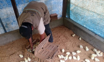 Samaritan's Purse trains beneficiaries how to build and maintain chicken coops so that the chickens will grow at a healthy rate.