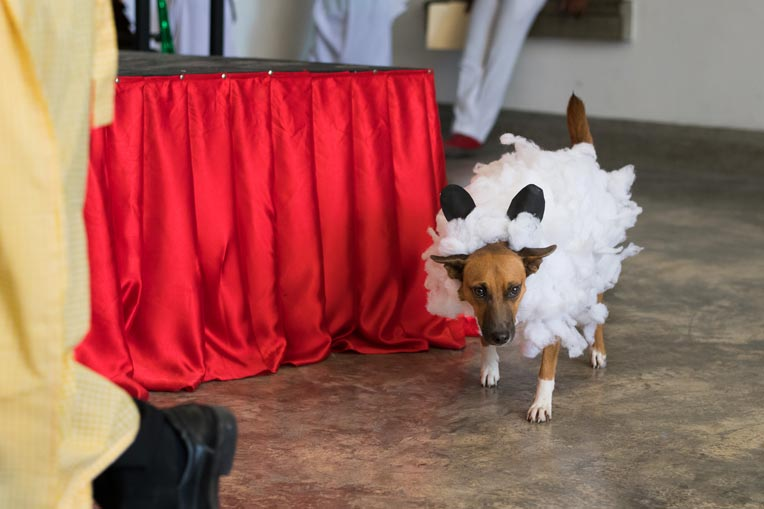 A unusual sheep (dog dressed in lamb costume) walks in for the Christmas play.
