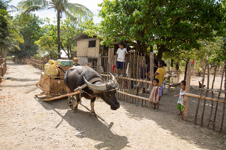 Transporting Operation Christmas Child shoebox gifts on water buffalo in the Philippines