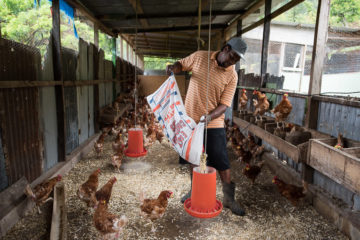 Vincent Younis has been a poultry farmer on Dominica for about 18 years.
