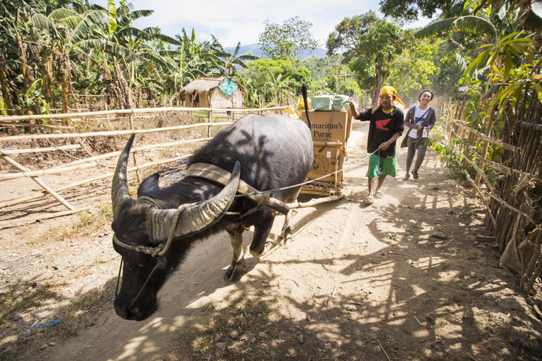 Water buffalo help transport Operation Christmas Child shoebox gifts to the village of an unreached people group in the Philippines.