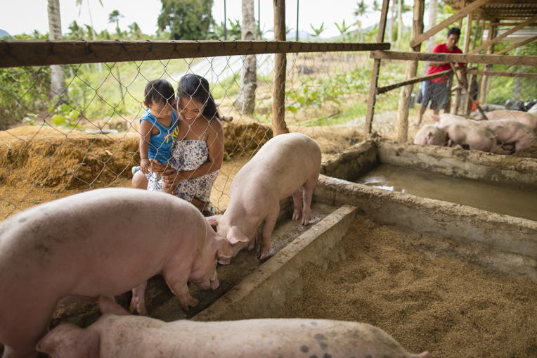 Our teams provide livestock, pig pen materials, and training on how to build the pig pen.