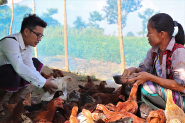 Chicken raising is reaching both project beneficiaries and community members.