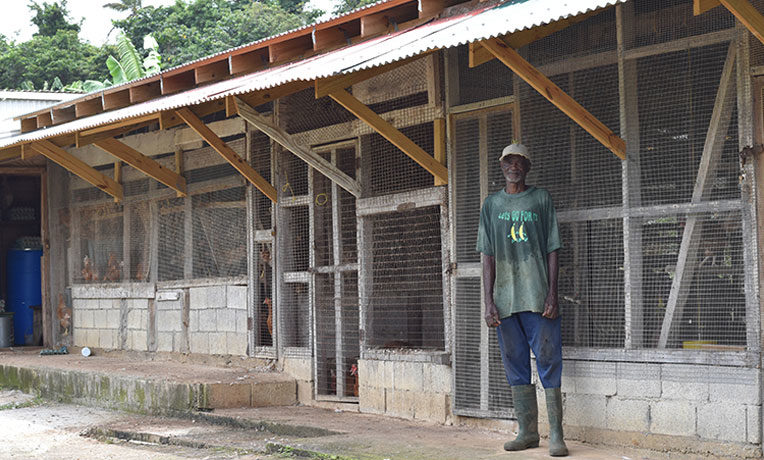 Chicken farmer Edmund Henderson is proud of his chicken coop, newly constructed after Hurricane Maria.