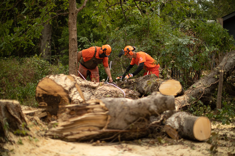 Chainsaw teams work hard to remove large trees toppled by an EF3 tornado last week.