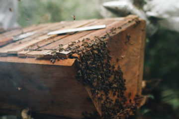 Our RECAL program provides training and materials for building and maintaining lucrative beehives.