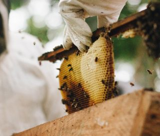 Samaritan's Purse is helping Liberians become beekeepers to support their families.