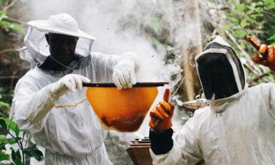 The Samaritan's Purse RECAL program helps Liberians create livelihoods through beekeeping.