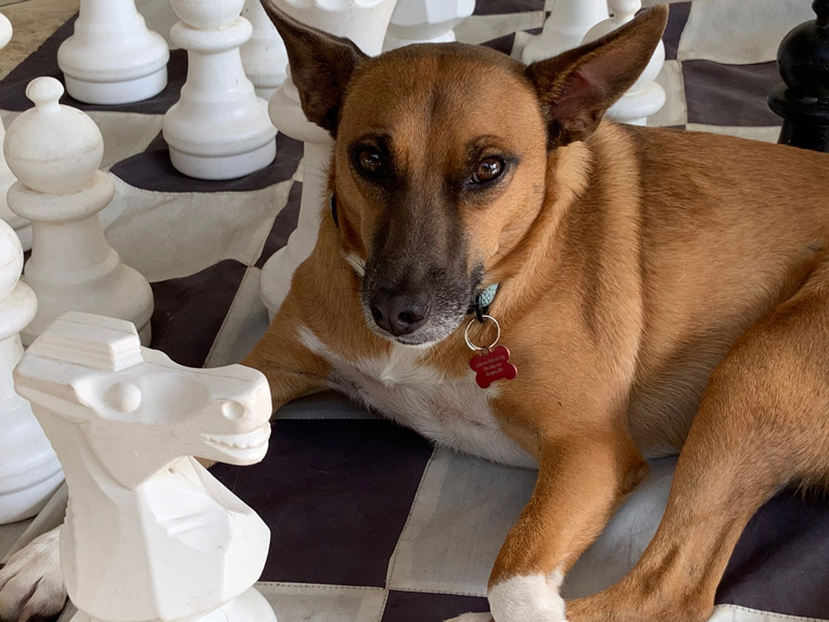 The dog in residence offers canine companionship to the players and the pieces.