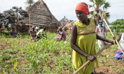 South Sudanese woman farming with rudimentary tools, related to Livelihoods projects, garden to kingdom