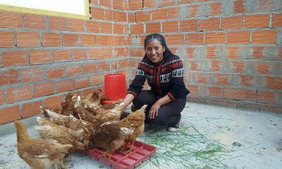 Marlene feeds the hens that Samaritan's Purse gave to her to help her start her own small business. Five years ago, Marlene and her family exchanged city life for the rural foothills of the snow-capped Illimani mountain. The 21,000-foot Andes subrange serves as a backdrop to Bolivia's capital city of La Paz where Marlene grew up. After Marlene's mother became estranged from her husband, she wanted to raise her daughters closer to family in the countryside of the Palca region.
