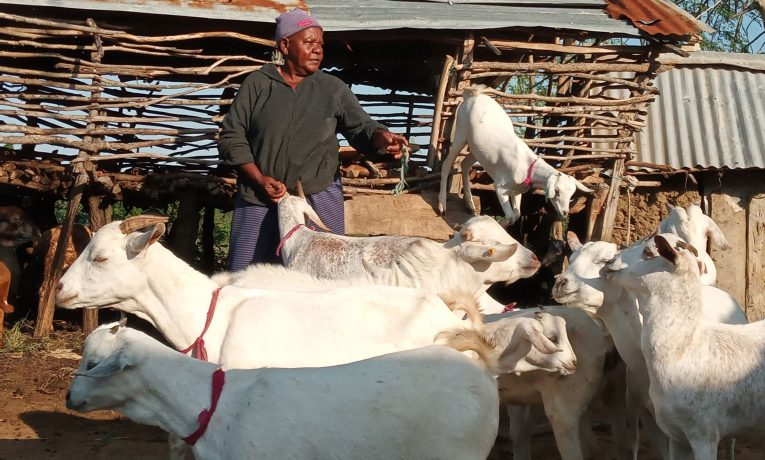 The goats provided to Rhoda by Samaritan's Purse are a great source of milk for her family.