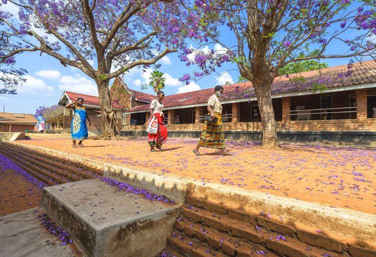 The beautiful jacaranda trees in bloom at Nkhoma Hospital.